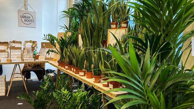 Pflanzenfestival Botanica in Basel: Die etwas andere grüne Welle