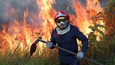 Forscher warnt:«Die Menschheit begeht mit der Zerstörung des Amazonas Selbstmord»