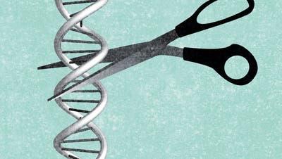 Im Schatten der Coronaforschung: Genschere Crispr/Cas9 schafft den Sprung in die Humanmedizin