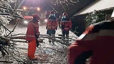 Schnee zwingt Bäume in die Knie – Fricktaler Feuerwehr hatte kaum Verschnaufpausen