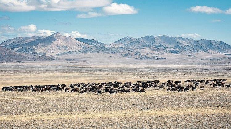 Hitzeperiode nach Hitzeperiode: Kippt das Klima in Zentralasien?