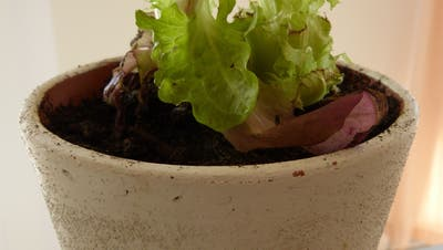 «Querbeet»: Mit diesem Trick erhält biologischer Küchenabfall ein zweites Leben