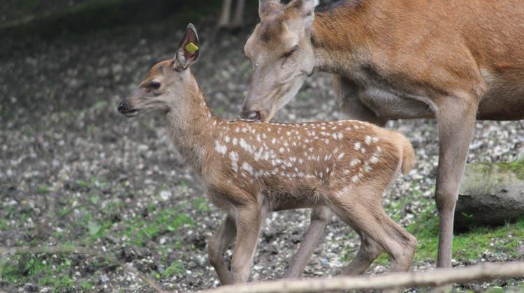 Die Natur vor der Haustür – in wenigen Schritten erreichbar ist der Hirschpark Luzern