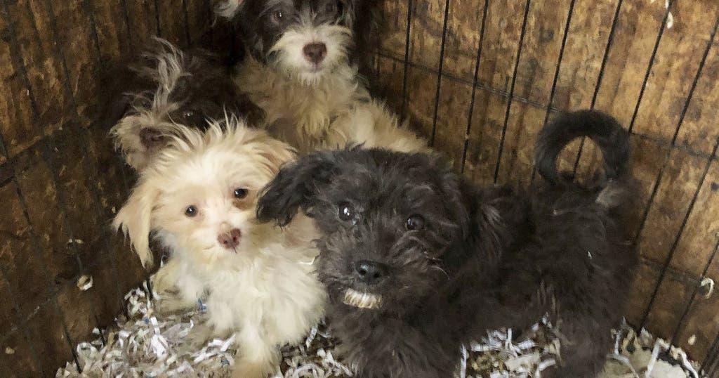Kast 130 Breed : Us polizei findet 44 gefrorene hunde in haus in new jersey