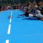 Am Samstag auf dem Vadianplatz: Wettrennen mit Mini-Vehikeln, die mit Solarstrom betrieben werden. (Bild: PD - 2. Juni 2018)