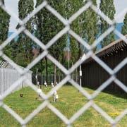 Zäune umranden das Gelände der Justizvollzugsanstalt Pöschwies. Der Angeklagte befindet sich seit Februar 2016 dort im vorzeitigen Strafvollzug. (Bild: Ennio Leanza/Keystone)