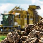 Schweizer Zucker ist unter Druck: Mit einem Rübenroder werden Zuckerrüben jeweils im Herbst geerntet. (Bild: Philipp Schulze/Keystone)