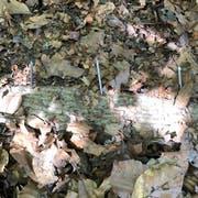 Auf einen dieser Nägel stand eine Wanderin aus Grabs. Der Nagel bohrte sich durch die Schuhsohle und in den Fuss hinein. Sie musste ärztlich versorgt werden. (Bild: PD)
