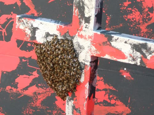 Der Bienenschwarm, der sich am Montag an einem der Kreuze im Festspiel-Bühnenbild niedergelassen hat. (Bild: Beda Hanimann - 17. Juni 2019)