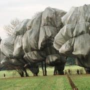 Das Projekt «Wrapped Trees» des Künstlerehepaars Christo und Jeanne-Claude im Park der Fondation Beyeler. Die Seile mit einer Länge von 23 Kilometern zur Fixierung der Verpackung der 163 Bäume stellte die Textilfirma Meister & Cie AG her. (Bild: Winfried Rothermel/AP, Riehen, 1. November 1997)