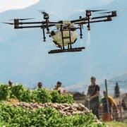 Nicht nur in Dänemark: Drohnen kommen auch in Schweizer Rebbergen zum Einsatz. (Bild: Alessandro della Valle/Keystone (Fully, 24. Juli 2018)