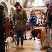 Die Vierbeiner beschnuppern sich in der katholischen Kirche. (Bild: Markus Bösch)