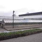 Der neue Vortragsraum wird anstelle der drei alten Gewächshäuser beim Tropenhaus errichtet. (Bild: PD)