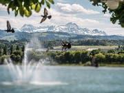«Die Region Ostschweiz hat viel zu bieten», sagt Bruno Damann – See und Alpstein inklusive. (Bild: Urs Bucher)
