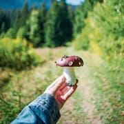 Pilzsammeln ist eine ideale Tätigkeit für ergebnisorientierte Menschen. Spazieren kann ja jeder. (Bild: Getty)