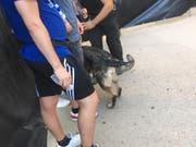 Konsequente Body Search: Die Fans werden von Spürhunden abgesucht. (Bild: z. V. g.)
