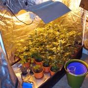 In Nebikon deckte die Polizei eine Indoor-Hanfanlage auf. (Bild: Luzerner Polizei)