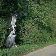 Der jagende Adler am Waldrand oberhalb der Burgmatt ist dem einstigen Korporationsschreiber Willy Dossenbach (†2007) gewidmet für seine langjährigen Verdienste. (Bild: Stefan Kaiser, Baar, 6. Mai 2019)