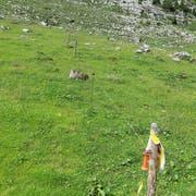 Die Weiden sind durch Zäune unterteilt. (Bild: Christof Hirtler)