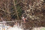 Hier stürzte der 13-Jährige ins Tobel. (Bild: Kapo)