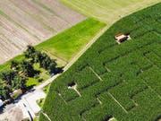 So sieht ein Teil das Labyrinths aus der Vogelperspektive aus. Aber der ganze Anblick soll natürlich nicht verraten werden. (Bild: Donato Caspari)