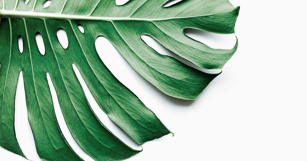 zimmerpflanzen sind die neuen gr nen helden sie reinigen sogar die luft luzerner zeitung. Black Bedroom Furniture Sets. Home Design Ideas