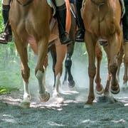 Eine Gruppe Reiter auf der Galopp-Piste entlang der Reuss in Buchrain. (Bild: Pius Amrein (Buchrain, 27. Juni 2018))