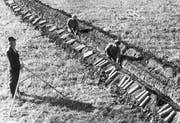 Das Bild aus dem Bundesarchiv zeigt den Bau eines Drainagesystems in den 1950er-Jahren. (Bild: PD)