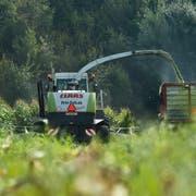 Ein Bauer bei der Ernte auf einem Maisfeld. Aus dem Mais wird Viehfutter produziert. (Bild: Dominik Wunderli; Ufhusen, 10. September 2015)