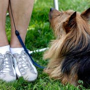 Ob Hunde in Wil auch in Grün- und Parkanlagen an die Leine müssen, entscheidet das Bundesgericht. (Bild: Alessandro della Bella/Keystone)
