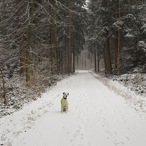 Winterspaziergang mit meinem Hund. (Bild: Andreas Helfenstein (Eschenbergerwald, 5. Januar 2019))