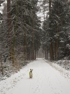 Unser Leser Andreas Helfenstein war mit seinem Hund auf einem Winterspaziergang durch den Eschenbergerwald in Winterthur. (Bild: Andreas Helfenstein (Winterthur, 5. Januar 2019))