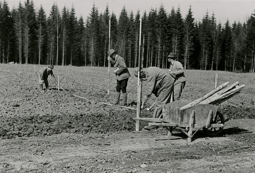 Während des zweiten Weltkriegs musste die Fabrik zeitweise geschlossen werden. Die Viscosuisse organisierte in jener Zeit unter anderem Kartoffelpflanzaktionen wie hier 1943 im Schiltwald, um die Arbeiter zu beschäftigen.