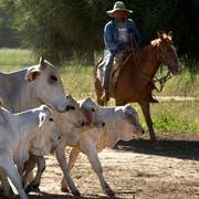 Rinder in Paraguay: Die Mercosur-Staaten sind für ihre Fleischexporte bekannt. (Bild: Noah Friedman-Rudovsky/Bloomberg, Chaco, 15. Dezember 2010)