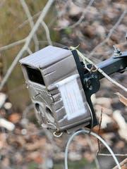 Aufnahmen einer installierten Kamera geben Aufschluss über die Biber.(Bild: Max Eichenberger)