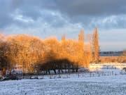 Am 11. Januar bot sich noch dieser Anblick auf die mächtige Baumgruppe. (Bild: Claudia Dieckmann)