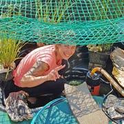 Jacqueline Gschwend-Pfenninger bei der Installation des neuen Biotops für ihre Wasserschildkröten. (Bild: Jens Teuber)