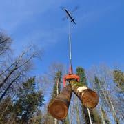 Ein Helikopter fliegt Bäume aus dem Wald. (Archivbild: Christian Perret)