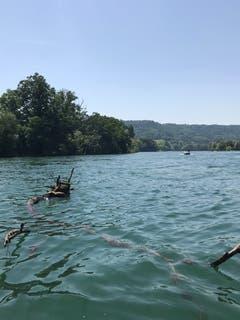 Je nach Wasserstand führt der Rhein hie und da Schwemmholz. (Bild: Samuel Koch)