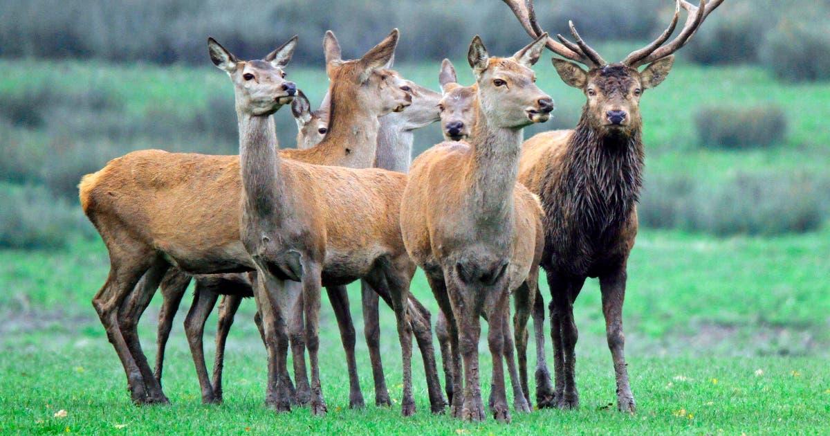 Wildfleisch ist begehrt, doch die heimische Jagd reicht nicht aus | St.Galler Tagblatt