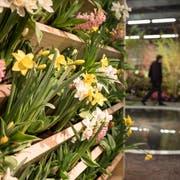 An der Gartenschau der Offa 2019 ist der Ostschweizer Floristenverband mit der Sonderschau Frühlingsblumen-Werkstatt vertreten. (Bilder: Adriana Ortiz Cardozo)