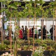 In der Halle 2.0 zeigen die Entsorgungsdienste der Stadt St.Gallen das Gärtnern auf dem Dach. (Bild: Adriana Ortiz Cardozo)