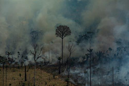 Wo einst prächtige Bäume standen, finden sich heute nur noch Ruinen. (Bild: Victor Moriyama / Greenpeace Bra)