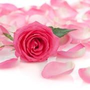Sogar für Babyhaut geeignet: das Rosen-Pflegeöl von Dr. Hauschka (23 Franken).
