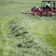 Im Trockensommer 2018 konnten die Landwirte im Mittel einen Schnitt weniger ausführen. (Bild: Urs Jaudas)