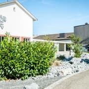 Die Steinrabatte beim Thomas-Bornhauser-Schulzentrum ist mit Kirschlorbeer begrünt. (Bild: Sabrina Bächi)
