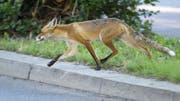 Im Unispital Zürich griff ein Fuchs eine Patientin an. (Symbolbild) (Bild: Keystone)