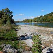Ein naturnah saniertes Stück Rheinufer nach dem Gusto der Interessengemeinschaft Rheinuferaufwertung. (Bild: PD)