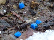 Diese blauen Schneckengiftkörner besiegelten Blackys Schicksal. (Bild: PD)