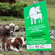 Eine Tafel macht auf die Mutterkühe aufmerksam. (Symbolbild: KEYSTONE/Arno Balzarini)